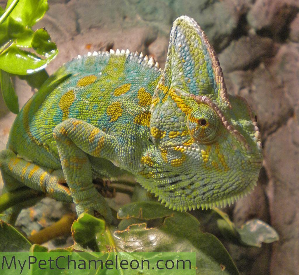 Female in heat colors